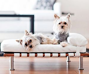 Puppy Love: The Best Decorating Ideas for Your Family's Furriest Member